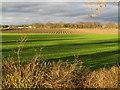 SJ3666 : Ploughed field alongside the River Dee/Afon Dyfrdwy by John S Turner