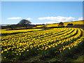 SW7635 : Fields at Treliever : Week 11
