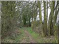 SK6147 : Bridleway near Lambley House by Alan Murray-Rust