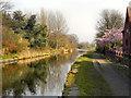 SJ6799 : Bridgewater Canal by David Dixon