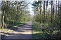 TL1369 : Footpath through woodland by Simon Judd