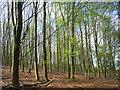 SU9187 : Farm Wood, Wooburn by Andrew Smith