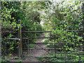 TL4051 : Haslingfield: Quarry Lane by John Sutton