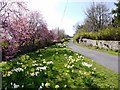 NU1109 : Spring flowers, Edlingham village by Andrew Curtis