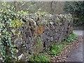 NS5651 : Eaglesham Old Mill by Kenneth Mallard