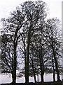 SX1662 : Boundary trees by Clare Pinnock