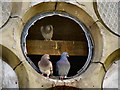 SD7111 : Pigeons at Astley Brook Cemetery Chapel by David Dixon