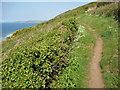 SX4151 : Coast path at Tregonhawke by Philip Halling