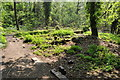 SP0982 : Moseley Bog Nature Reserve by Ashley Dace