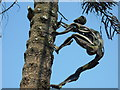 """SP9632 : One of two """"men"""" climbing up the """"monkey puzzle"""" tree in Woburn Abbey gardens by pam fray"""
