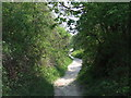 TQ3811 : Path on the South Downs by Malc McDonald