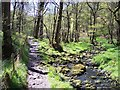 SD5348 : Grizedale Brook and path in Holme Wood by Raymond Knapman