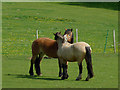 SO8686 : Friendly horses near Gothersley, Staffordshire by Roger  Kidd