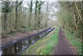 TQ0134 : Wey and Arun Canal, Wey South Path, Sidney Wood by N Chadwick