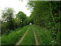 SE6549 : Track (footpath) through Grimston Wood by JThomas