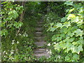 SP9011 : Steps taking footpath up canal embankment by PAUL FARMER