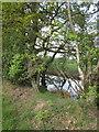 SJ8573 : Roadside pond by Peter Turner