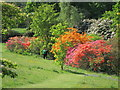 TQ8332 : Azaleas at Hole Park by Oast House Archive