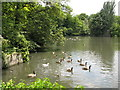 TQ3768 : The lake in Kelsey Park (2) by Mike Quinn