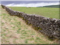 SE0699 : Drystone wall Marrick Moor by Miss Steel