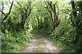 SX1173 : Blisland: shaded track by Martin Bodman