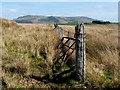 NS4982 : Moorland fence by Lairich Rig