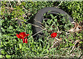 NN9108 : Tulips and Tyre by Martin Addison