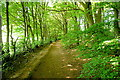 SP8300 : Path through Monkton Wood by Graham Horn