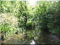 TQ4075 : The Quaggy River west of Weigall Road, SE12 (4) by Mike Quinn