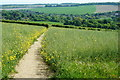 TQ5265 : Footpath to Eynsford, Kent by Peter Trimming