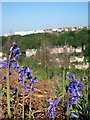 TQ8209 : Bluebells on East Hill by Oast House Archive