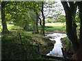 SP1967 : Alder-fringed brook below Holywell by Robin Stott