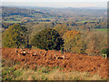 SO7538 : Red Deer in Eastnor Park by Trevor Rickard