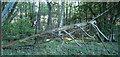 TL8005 : Skeletal Tree, Thrift Wood, Woodham Mortimer by Roger Jones
