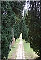 TQ8431 : High Weald Landscape Trail in St Mary's churchyard by N Chadwick