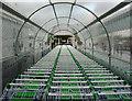 NT1288 : Shopping trolleys, Asda : Week 21