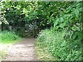 NT4375 : Path, Longniddry Dean by Richard Webb