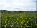 SO4867 : Footpath through a rape field near Portway by Jeremy Bolwell
