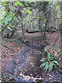 TQ4466 : The Kyd Brook - Main Branch, in Roundabout Wood (4) by Mike Quinn