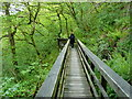 NN7623 : A walk through the treetops in Laggan Wood by Anthony O'Neil