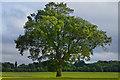 TQ2955 : Lone Tree : Week 22