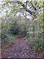 TQ4366 : Footpath in Sparrow Wood by Mike Quinn