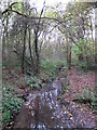 TQ4366 : The Kyd Brook - Main Branch, in Sparrow Wood (7) by Mike Quinn