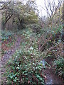 TQ4366 : The Kyd Brook - Main Branch, in Sparrow Wood (10) by Mike Quinn