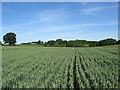 TQ5408 : Bridge Field (1) by Simon Carey
