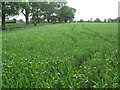 SJ7868 : FP to Blackyard farm. by marplerambler