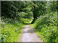 ST7434 : Path, Hilcombe Hanging by Miss Steel