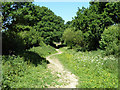 TQ1319 : Bridleway 1882 heads north by Robin Webster