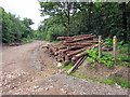 TR1159 : Wood pile in Church Wood by Oast House Archive