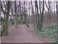 TQ4465 : Footpath in Darrrick Wood by Mike Quinn